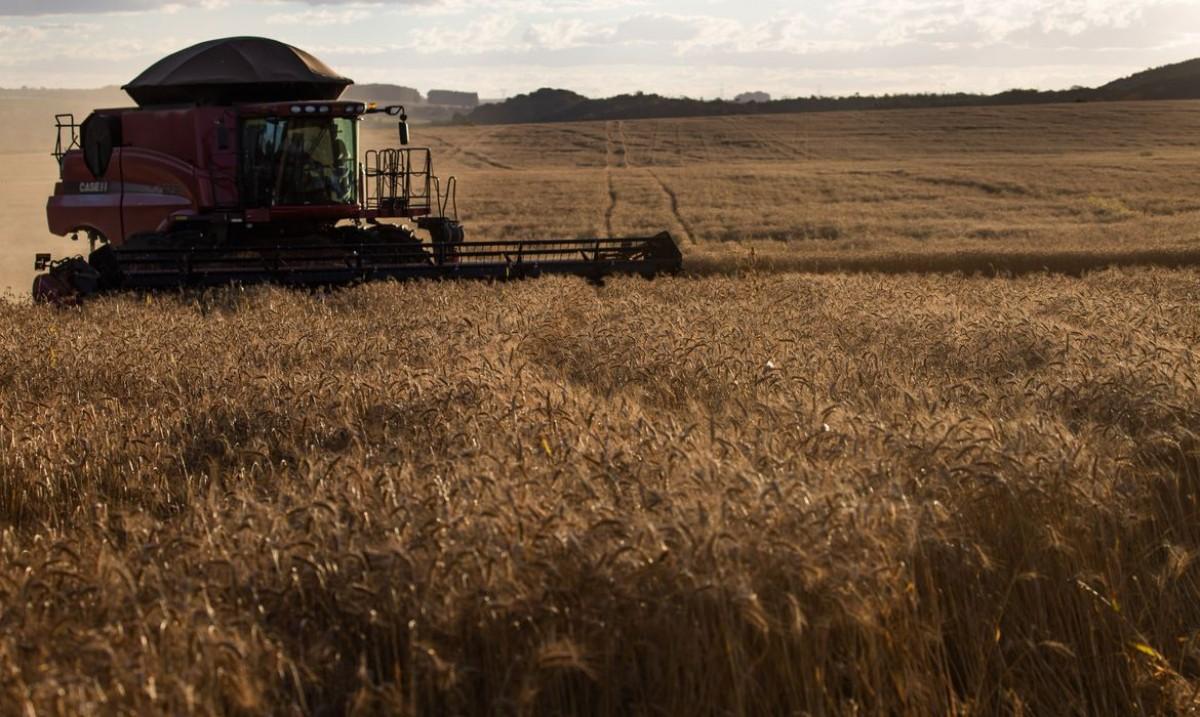Governo fixa ações para avaliar importação de produtos agropecuários (Foto: CNA/ Wenderson Araujo/ Trlux)
