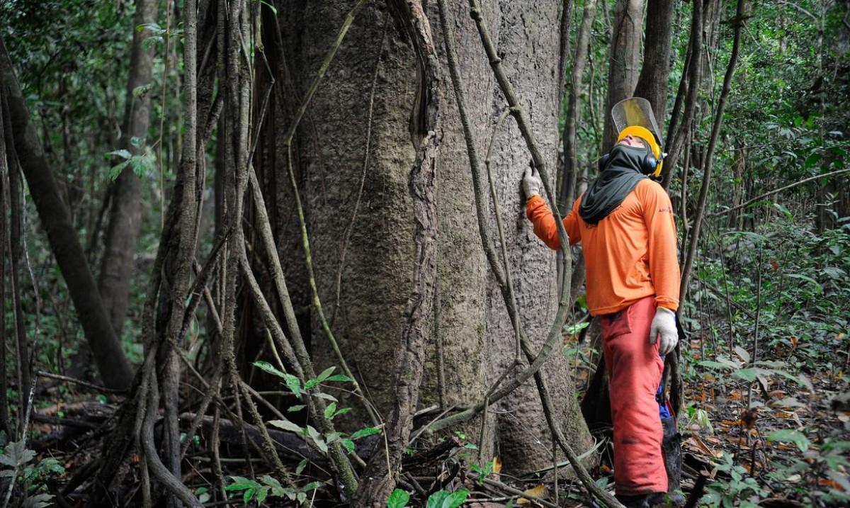 Governo estuda concessão de cinco áreas florestais no Amazonas (Foto: Tomaz Silva/ Agência Brasil)