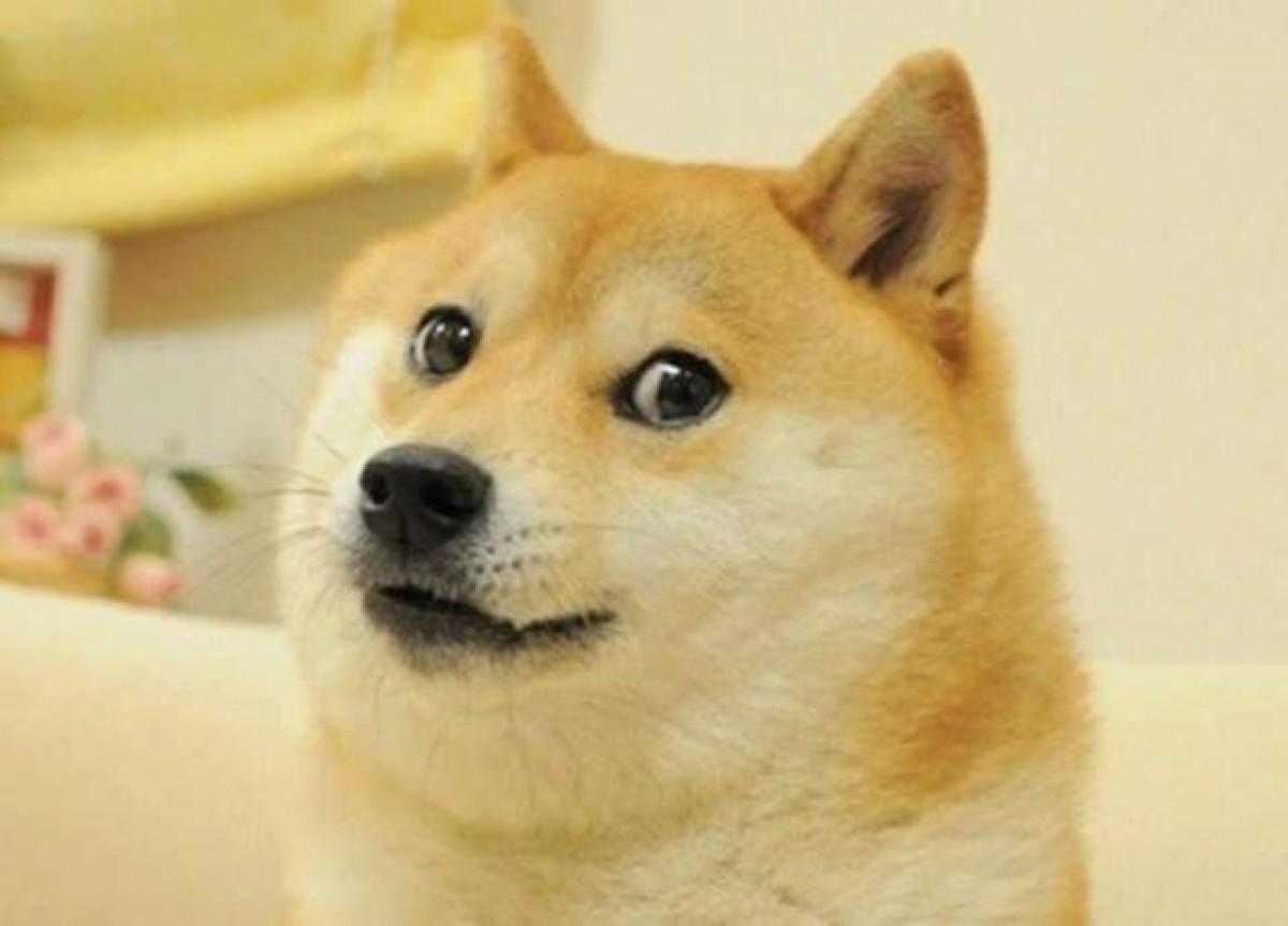 """""""Doge"""" rouba o posto do meme NFT mais caro da história, que era ocupado pelo meme """"Disaster Girl"""" (Foto: Olhar Digital)"""