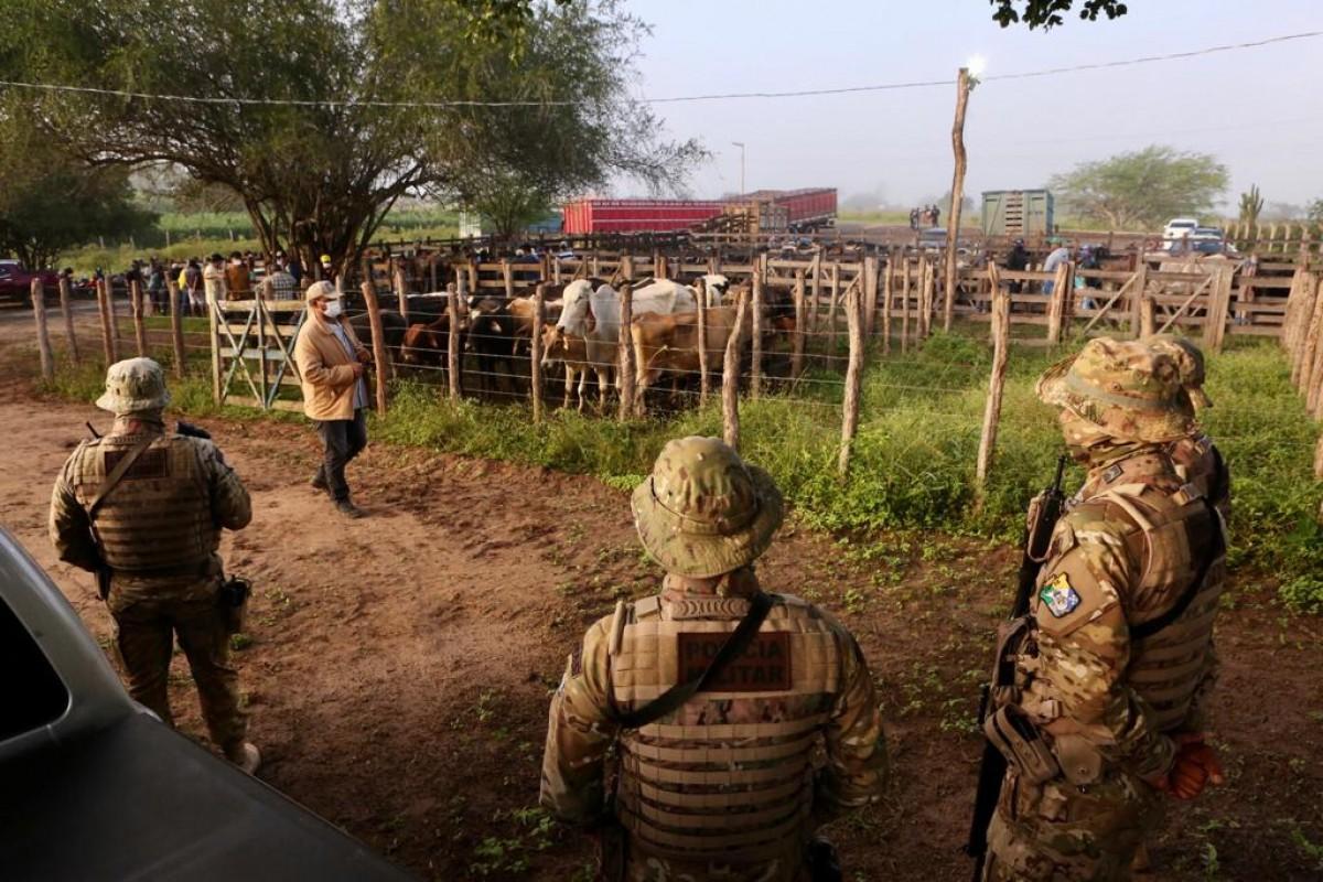 Em operação, Dercra e Ciopac flagram feira com venda de gado sem indicação de origem em Nossa Senhora da Glória (Foto: Jorge Henrique/ SSP/SE)