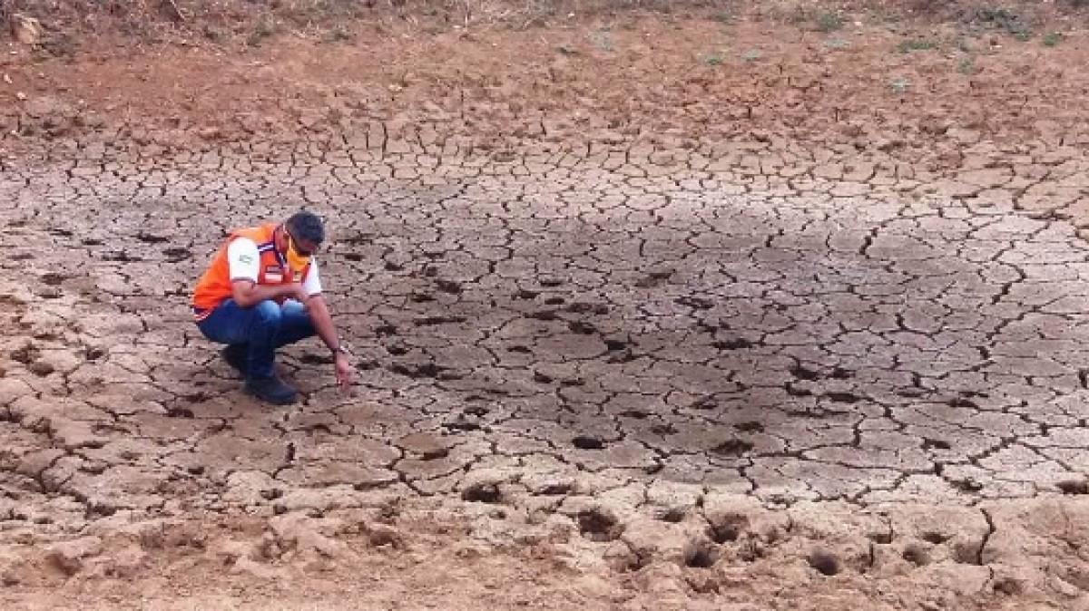São 12 municípios em situação de emergência por seca ou estiagem (Foto: Defesa Civil de Sergipe)